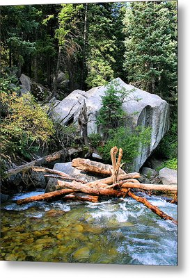 Nature's Filters Metal Print by Kristin Elmquist