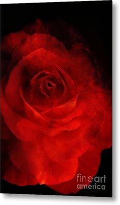 Metal Print featuring the photograph Natures Flame by Stephen Mitchell