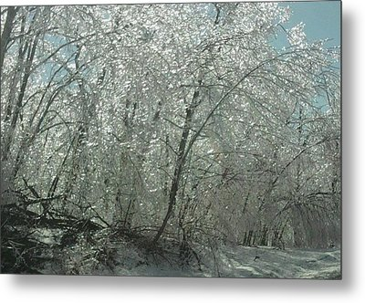 Metal Print featuring the photograph Nature's Frosting by Ellen Levinson