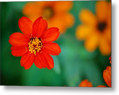 Metal Print featuring the photograph Nature's Glow by Debbie Karnes