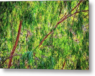 Natures Greens, Yanchep National Park Metal Print by Dave Catley