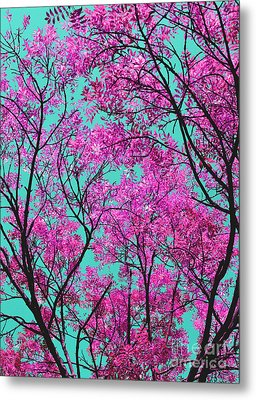 Metal Print featuring the photograph Natures Magic - Pink And Blue by Rebecca Harman