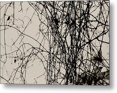 Nature's Pen And Ink Metal Print by Susie DeZarn
