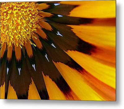Nature's Pinwheel Metal Print