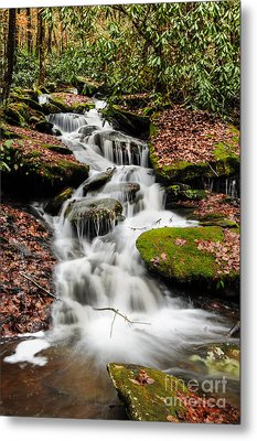 Natures Surprise Metal Print by Debbie Green
