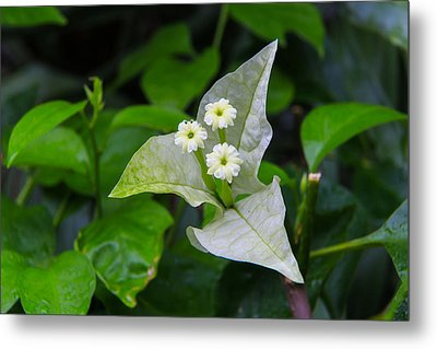 Nature's Triplets Metal Print by Christopher L Thomley