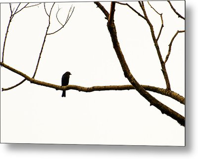 Nature - Bird On A Tree Branch 2 Metal Print