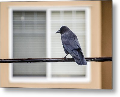 Nature - Crow On Wire Metal Print by Arthur Babiarz