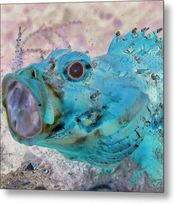 Metal Print featuring the photograph Nautical Beach And Fish #1 by Debra and Dave Vanderlaan