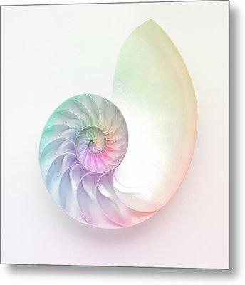 Nautilus Shell Metal Print by Angel Rodriguez