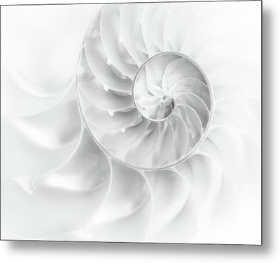 Nautilus Shell In High Key Metal Print