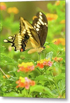 Nectar Collection Metal Print