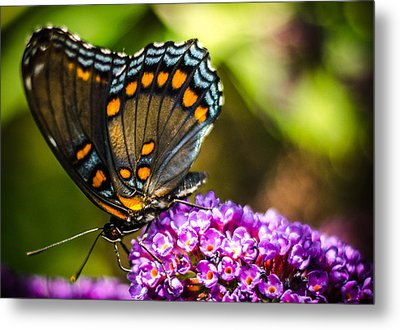 Butterfly Beauty  Metal Print by Bruce Pritchett
