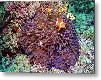 Nemo's Home Metal Print