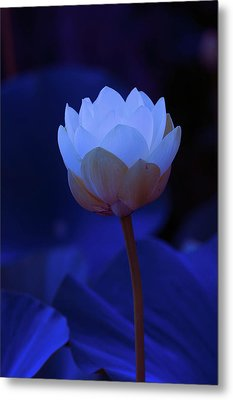Metal Print featuring the photograph Neon Lotus by Carolyn Dalessandro