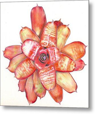 Neoregelia Small Wonder Metal Print