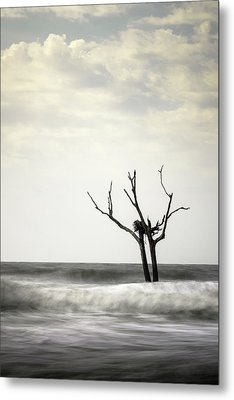 Nesting Metal Print by Ivo Kerssemakers
