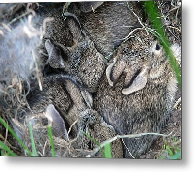 Nestled In Their Den Metal Print