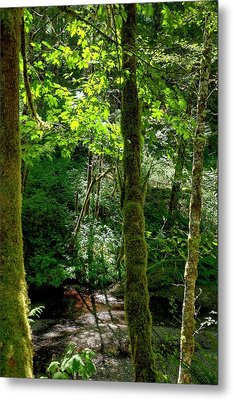 Nestucca River 3039 12x18 Metal Print by Jerry Sodorff