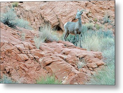 Nevada Rocks 31c Metal Print