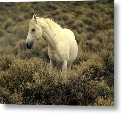 Nevada Wild Horses 4 Metal Print by Marty Koch
