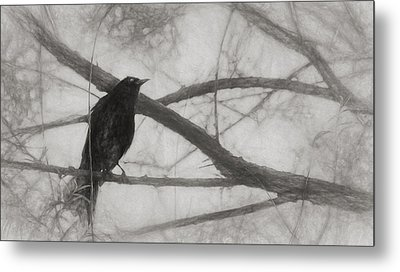 Nevermore Metal Print by Melinda Wolverson