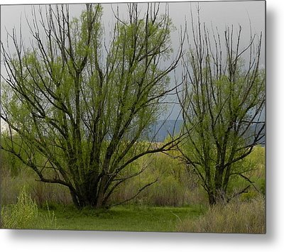 New And Green Metal Print by Adrienne Petterson