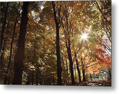 New England Autumn Forest Metal Print by Erin Paul Donovan