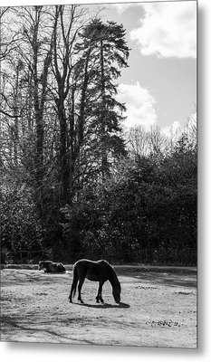 New Forest Silhouette Metal Print