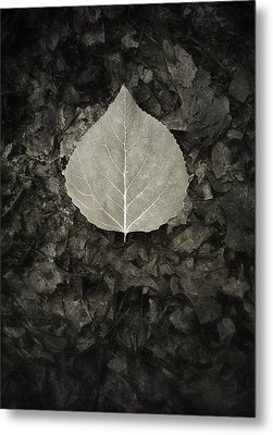 New Leaf On The Old Metal Print by Scott Norris