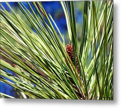 Metal Print featuring the photograph New Life by Betty Northcutt