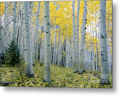 Metal Print featuring the photograph New Morning by The Forests Edge Photography - Diane Sandoval