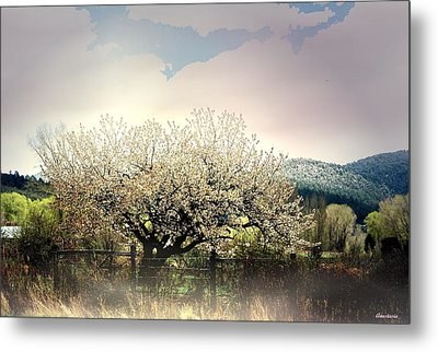Metal Print featuring the photograph New Snow In El Valle by Anastasia Savage Ealy