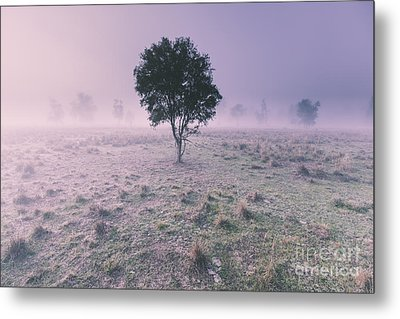 New South Wales Foggy Meadow Metal Print
