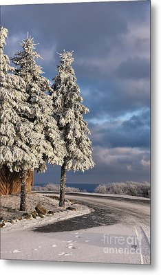 New Year's Day Metal Print by Lois Bryan