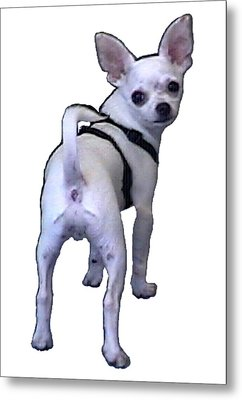 New York City Doggie 2002 What Are You Looking At 1a Jgibney Art 2009 Transp Metal Print by jGibney