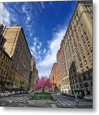 New York Park Ave. Cherry Blossoms Metal Print by Cameron Dixon