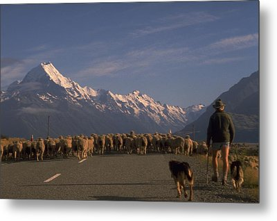 New Zealand Mt Cook Metal Print by Travel Pics