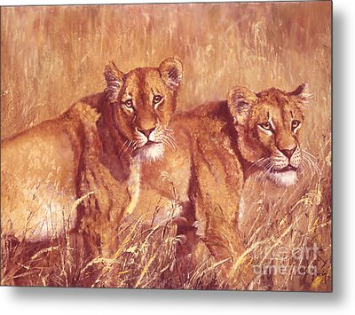 Ngorongoro Lionesses Metal Print by Silvia  Duran