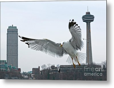 Metal Print featuring the photograph Niagara Falls With Gulls by Charline Xia