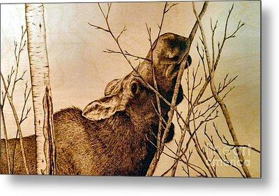 Nibbling The Willow Metal Print by Adam Owen