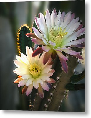 Metal Print featuring the photograph Night-blooming Cereus 3 by Marilyn Smith