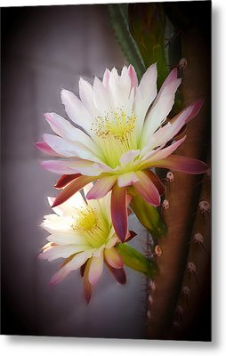 Metal Print featuring the photograph Night Blooming Cereus by Marilyn Smith