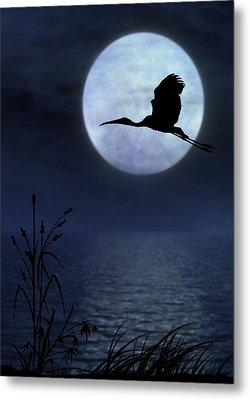 Night Flight Metal Print by Christina Lihani