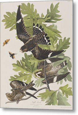 Night Hawk Metal Print by John James Audubon