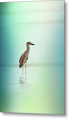 Night Heron By Darrell Hutto Metal Print by J Darrell Hutto