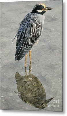 Night Heron Reflection Metal Print by Rose  Hill