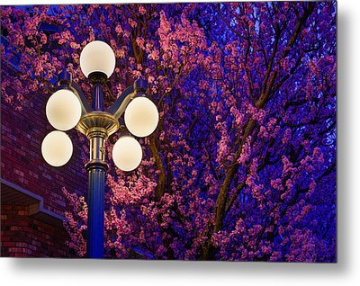 Night Of The Cherry Blossoms Metal Print