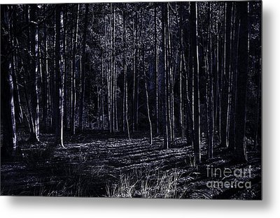 Night Thicket  Metal Print by Jorgo Photography - Wall Art Gallery