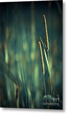Night Whispers Metal Print